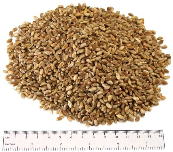 Poultry Wheat